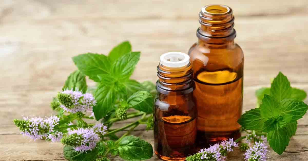 Does Peppermint Oil Repel Spiders Fact Or Myth Pestguide Org
