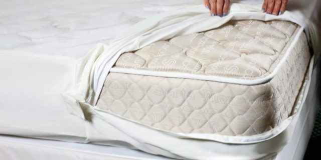 How To Get Rid Of Bed Bugs In A Mattress Pestguide Org